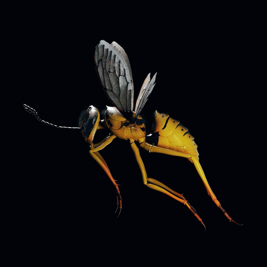 Wasp Loop V04 (00056)